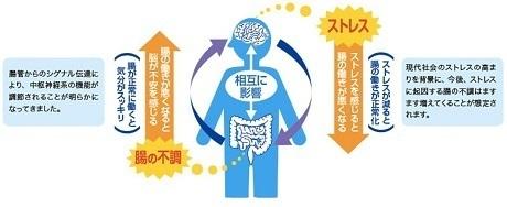 プレミア ガセリ 菌 効果